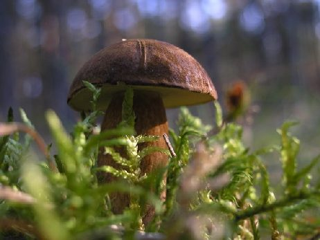 Bory Tucholskie to nie tylko grzyby.