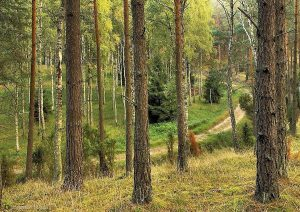 Leśna droga - fot. Bogdan Nitka