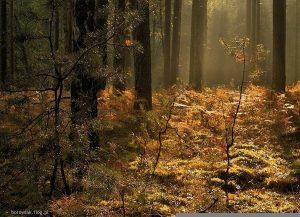 Poranek w lesie - fot. Bogdan Nitka