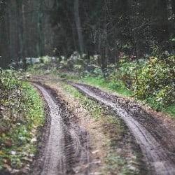 Leśne drogi Borów Tucholskich