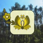 BoryTucholskie.net