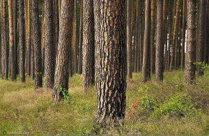 Drzewa - fot. Bogdan Nitka