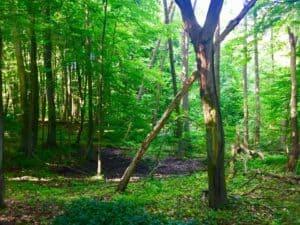 Rezerwat Cisów - fot. Adam Paluśkiewicz