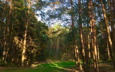 Lipiec 2019 🌞😎🏊 – Wydarzenia w Borach Tucholskich [MAPA]