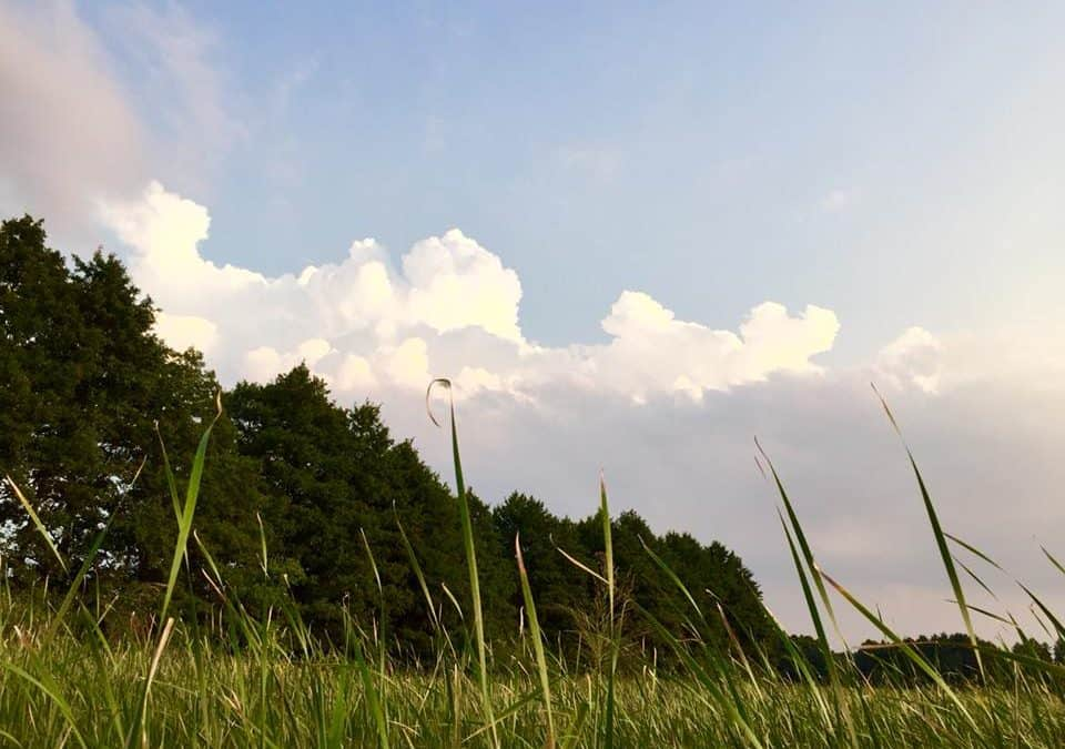 Sierpień 2019🌞😎🏊 – Wydarzenia w Borach Tucholskich [MAPA]