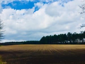 Pole - fot. Adam Paluśkiewicz