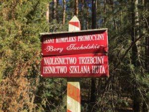 Leśnictwo Szklana Huta, fot. Adam Paluśkiewicz