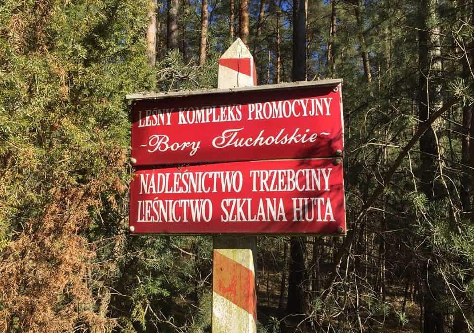 Hutnictwo szkła w Borach Tucholskich