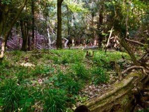 Rezerwat Cisów we Wierzchlesie - fot. Adam Paluśkiewicz