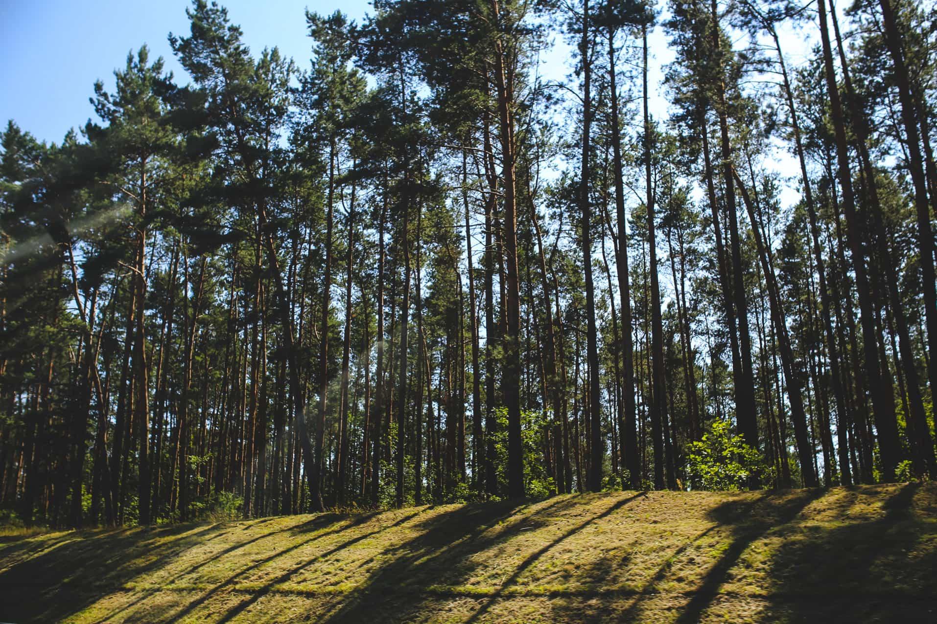 Atrakcje przyrodnicze Borów Tucholskich